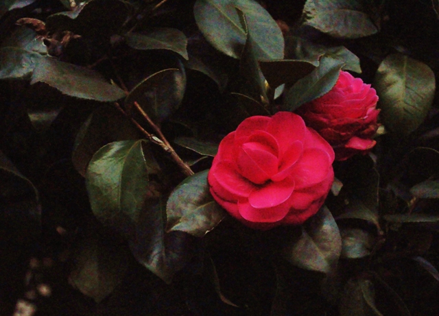 2011_0221_174351dsc_0585
