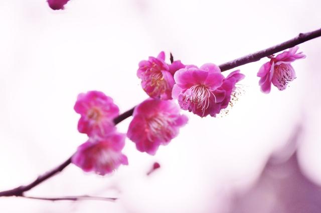 2011_0225_163213dsc_0640_2
