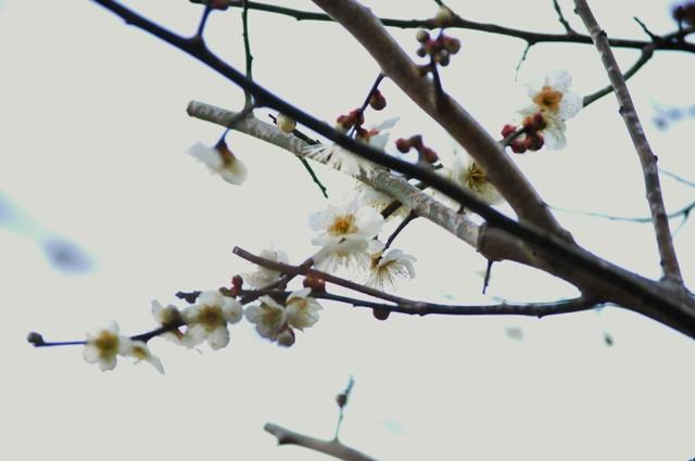 2011_0225_164847dsc_0673