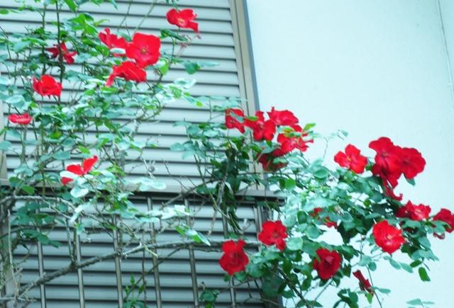 2011_0510_115755dsc_2416