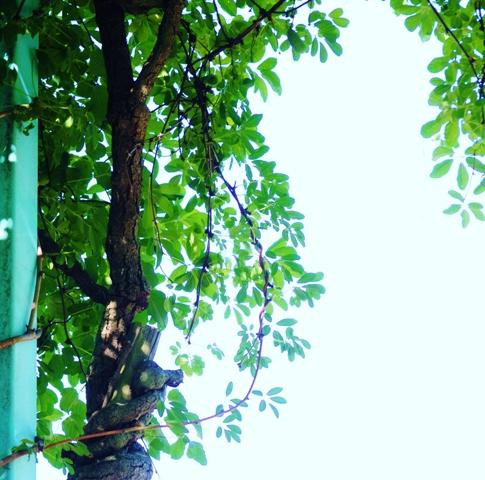 2011_0722_160617dsc_5684