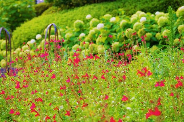 2011_0729_170610dsc_5868_2