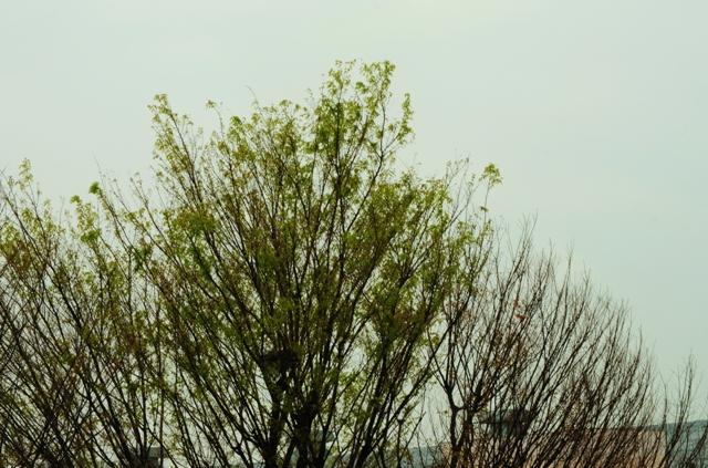 2012_0413_162622dsc_3992